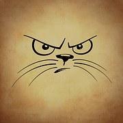 chat-mécontent
